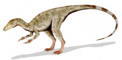 ficha-Compsognathus
