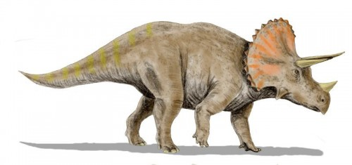 ficha-Triceratops