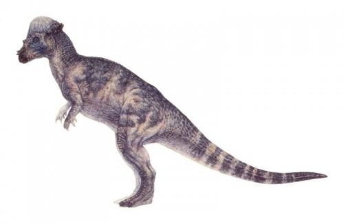 ficha-pachycephalosaurus