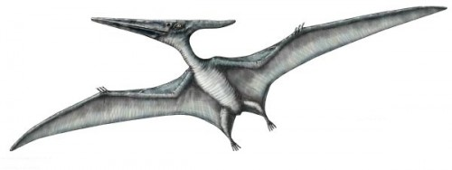 ficha-pteranodon
