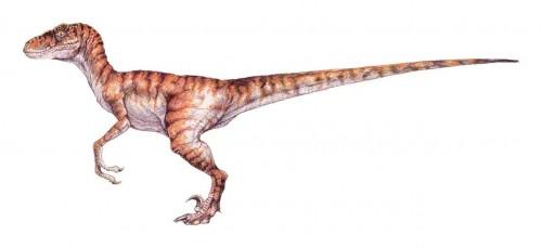 ficha-velociraptor